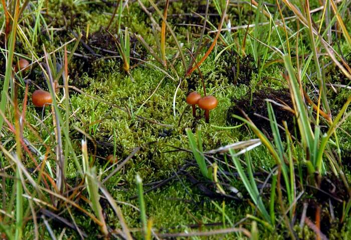 Blue Planet Biome Tundra | Autos Post