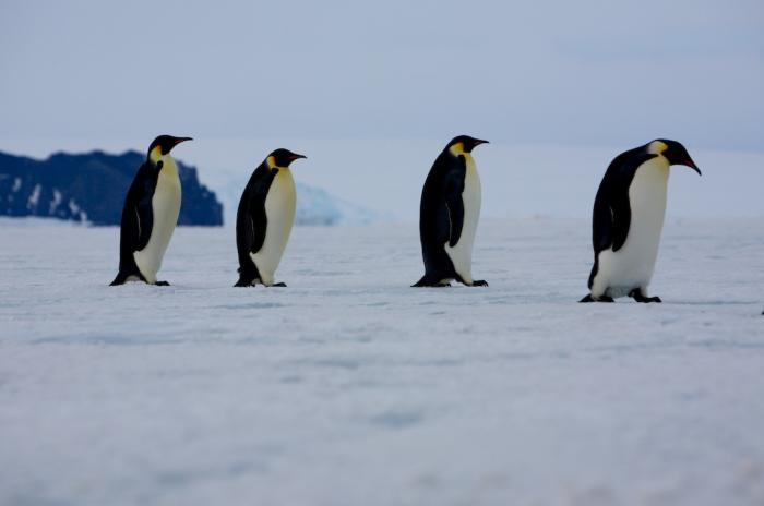Penguins Ice Stories Dispatches From Polar Scientists