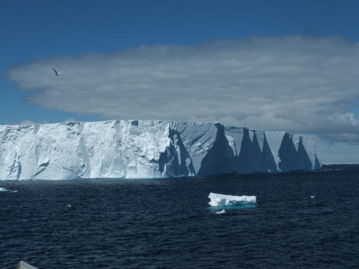 Antarctic Marine Ecosystem Ice Stories Dispatches From Polar Scientists